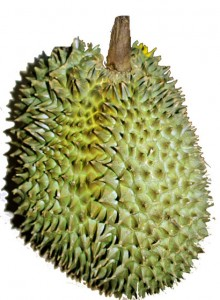 durian fruit 33 week baby size 220x300 Dear Rainbow Baby